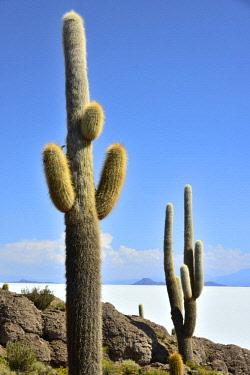 BOL8644AW South America, Andes, Altiplano, Bolivia, Salar de Uyuni, Isla Incahuasi,