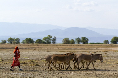 HMS2140973 Kenya, lake Magadi, Masai woman leaving a waterpoint with her donkeys