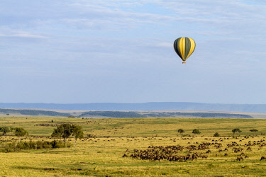 HMS2141009 Kenya, Masai Mara game Reserve, balloon above wildebeest