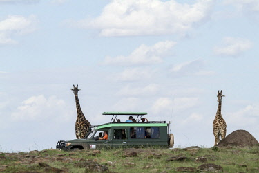HMS2141112 Kenya, Masai Mara Game Reserve, Girafe masai (Giraffa camelopardalis), and tourism vehicle during a safari