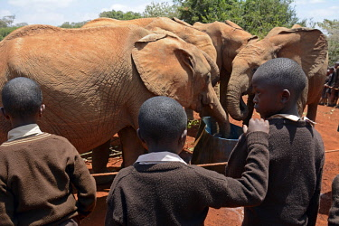 HMS2255695 Kenya, Nairobi, Kenyan school visiting the Sheldrick Elephant Orphanage