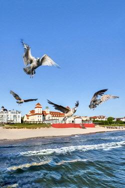 GER9794AW Seagulls and Kurhaus, Binz, Rügen Island, Mecklenburg-Western Pomerania, Germany