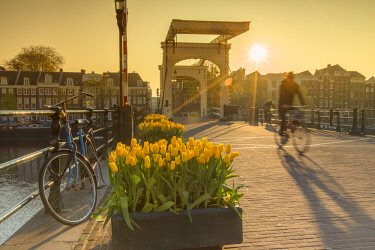 NLD0425AW Tulips and bicycle on Skinny Bridge (Magere Brug) on Amstel River, Amsterdam, Netherlands