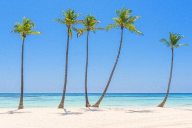 DMR0063AW Juanillo Beach (playa Juanillo), Punta Cana, Dominican Republic. Palm-fringed beach.