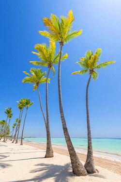 Juanillo Beach (playa Juanillo), Punta Cana, Dominican Republic. Palm-fringed beach. © AWL Images