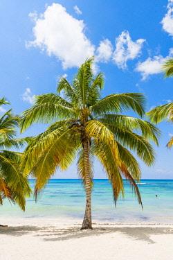 DMR0154AWRF Mano Juan, Saona Island, East National Park (Parque Nacional del Este), Dominican Republic, Caribbean Sea.