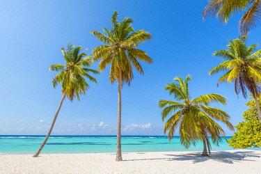 DMR0162AWRF Canto de la Playa, Saona Island, East National Park (Parque Nacional del Este), Dominican Republic, Caribbean Sea.