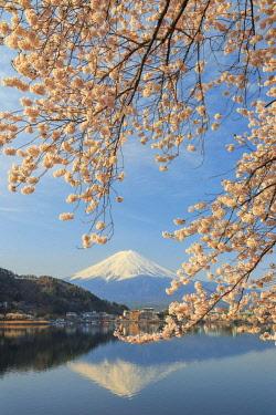 JP04019 Japan, Yamanashi Prefecture, Kawaguchi-ko Lake, Mt Fuji and Cherry Blossoms