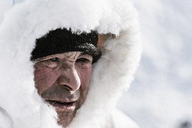 GRN1326 Inuit, Villi Siegstad prepares his dogs, Ilulissat, West Greenland