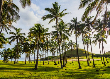 CHI10624AW Palm Trees by the Anakena Beach, Easter Island, Chile