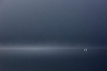 CLKMG60680 Whooper swans in Lake Kussharo, Hokkaido, Japan