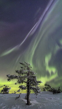 CLKRM58606 Panorama of snowy woods and frozen trees framed by Northern lights and stars Levi Sirkka Kittilä Lapland region Finland Europe