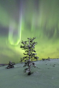 CLKRM58639 Northern lights and starry sky on the snowy landscape and the frozen trees Levi Sirkka Kittilä Lapland region Finland Europe