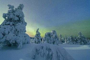 CLKRM58652 Frozen trees in snowy woods framed by starry sky in the cold polar night Ruka Kuusamo Ostrobothnia region Lapland Finland Europe