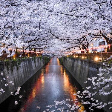 JAP1148AW Nakameguro Sakura Festival, Tokyo, Japan