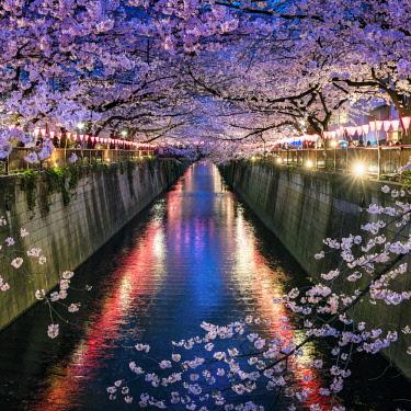 JAP1151AW Nakameguro Sakura Festival, Tokyo, Japan