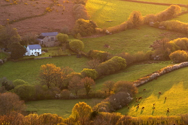 ENG14616AW Rural cottage in idyllic countryside surroundings, Dartmoor National Park, Devon, England. Spring (April) 2017.