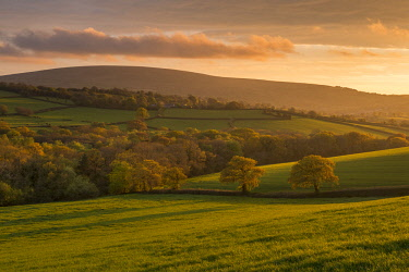 ENG14649AW Gorgeous evening sunlight illuminates the spring trees and fields of South Tawton, Dartmoor, Devon, England. Spring (May) 2017.