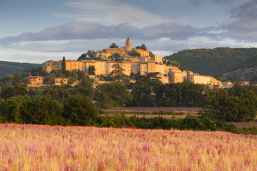 FRA9979AW France, Provence Alps Cote d'Azur, Haute Provence, Banon at sunrise with a field of pink sage in the foreground