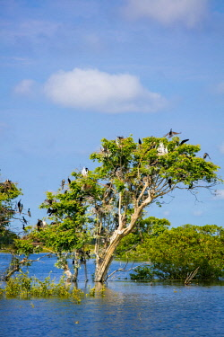 AS40DPB0032 Prek Toal Bird Sanctuary, Tonle Sap Lake, Cambodia