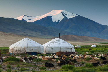 AS25AWO0000 Goat herd and yurts, Altai Mountains, Mongolia