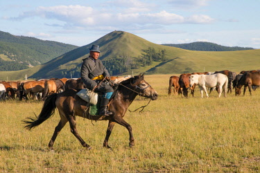 AS25TNO0017 Horses being herded by riders. Mongolia.