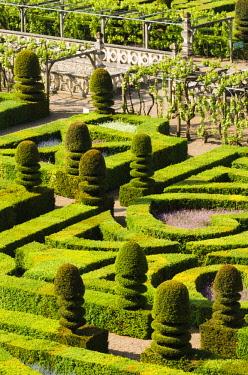 EU09RBS0225 Garden detail, Chateau de Villandry, Villandry, Loire Valley, France