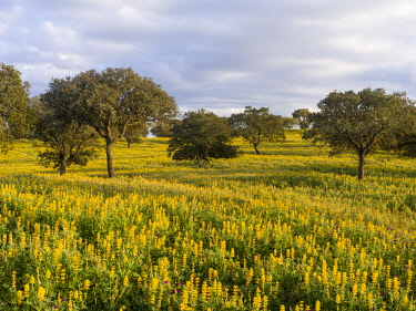 EU23MZW0380 Landscape with wildflower meadow near Mertola in the nature reserve Parque Natural do Vale do Guadiana, Portugal, Alentejo