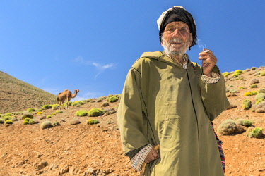MOR2334AW Africa, Morocco, Marrakesh, Camel herder in the  Gorges du Dades