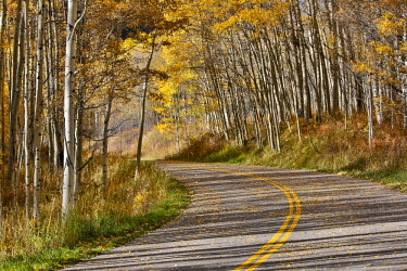 US06DGU0019 Curved Roadway near Aspen, Colorado in autumn colors and aspens groves.