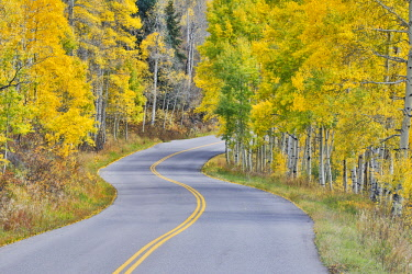 US06DGU0025 Curved Roadway near Aspen, Colorado in autumn colors and aspens groves.