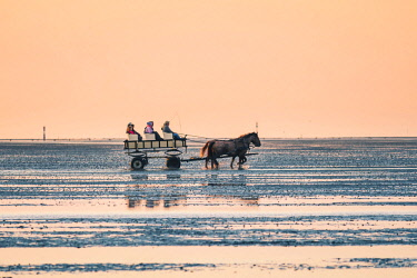 GER10204AW Horsecart on the Wadden Sea at sunset, Duhnen, Cuxhaven, Lower Saxony, Germany.