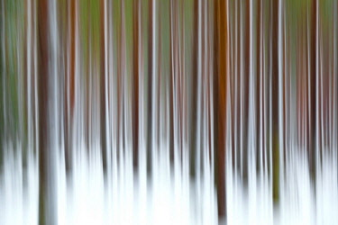 CLKRM58106 Abstract details of tree trunks in the snowy woods Alaniemi Rovaniemi Lapland region Finland Europe
