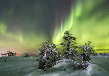 CLKRM58625 Northern lights and starry sky on the snowy landscape and the frozen trees Levi Sirkka Kittila Lapland region Finland Europe