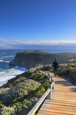 SAF7143AW Man walking at Cape of Good Hope, Cape Point National Park, Cape Town, Western Cape, South Africa (MR)