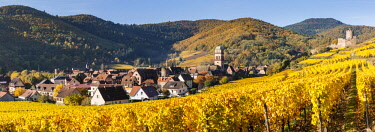 HMS2879352 France, Haut-Rhin, Alsace Wine Route, Kaysersberg, the vineyard and the Sainte-Croix church