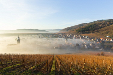 HMS2881447 France, Haut Rhin, Route des Vins d'Alsace, Riquewihr labelled Les Plus Beaux Villages de France (One of the Most Beautiful Villages of France), the village in the morning mist in wintertime