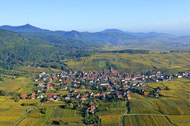HMS2141480 France, Haut Rhin, Alsace Wine Road, Riquewihr village, labelled Les Plus Beaux Villages de France (The Most Beautiful Villages of France) and the vineyard (aerial view)