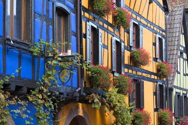 HMS2198048 France, Haut Rhin, Route des Vins d'Alsace, Riquewihr labelled Les Plus Beaux Villages de France (The Most Beautiful villages of France), half timbered facades and flowers hanging