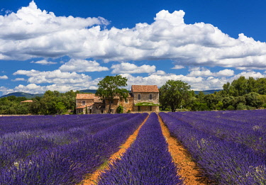 FRA10121AW Farmhouse and lavender in Vaucluse, Provence, France