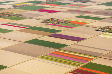 NL02369 Aerial view of the tulip fields in North Holland, The Netherlands