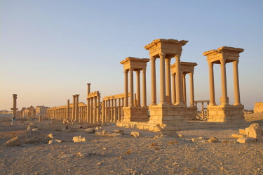 IBLAAA03764830 Ruins of the ancient city of Palmyra in the morning light, Palmyra District, Homs Governorate, Syria, Asia