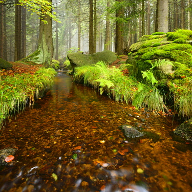 IBLAVI03961071 Stream in a misty mountain forest, Harz Nationa Park, Saxony-Anhalt, Germany, Europe