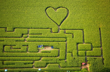 IBLBLO04305152 Labyrinth with a heart in the cornfield, corn maze, green heart, heart shape, heart shaped, Herten, Ruhr district, North Rhine-Westphalia, Germany, Europe