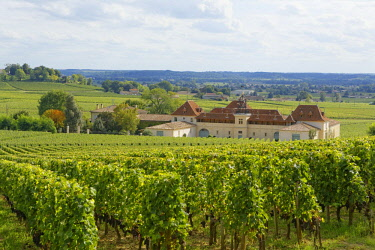 IBLCHG04072441 Bordeaux vineyard and Chateau Angelus, Saint-�milion, Gironde, Aquitaine, France, Europe