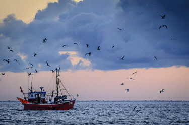 IBLSHA03724822 Departing fishing cutter in the morning with seagulls, Niendorf, Timmendorfer Strand, Ostholstein, Schleswig-Holstein, Germany, Europe