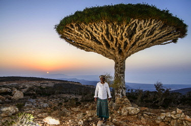 ibxrun04037933 Yemenite man standing in front of a Socotra Dragon Tree or Dragon Blood Tree (Dracaena cinnabari), Dixsam plateau, Socotra, Yemen, Asia