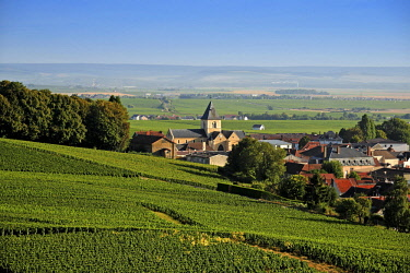 HMS2685636 France, Marne, Le Mesnil sur Oger, Cote des Blancs, village with a church in the middle of a vineyards of Champagne classified Premier Cru