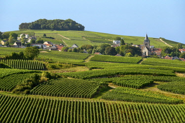 HMS2685684 France, Marne, Ville Dommange, mountain of Reims, vineyards of Champagne with a background village and a church