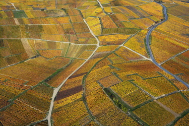 HMS2855166 France, Marne, hillsides of Champagne listed as World Heritage by UNESCO, Hautvillers, vineyards during fall (aerial view)